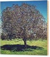 Sleeping Tree  Wood Print
