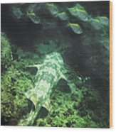 Sleeping Wobbegong And School Of Fish Wood Print