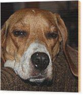 Sleepy Beagle Wood Print