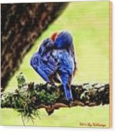 Sleepy Bluebird Wood Print