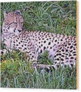 Sleepy Cheetah Wood Print