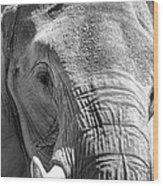 Sleepy Elephant Lady Black And White Wood Print
