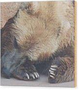 Sleepy Grizzly Bear Wood Print