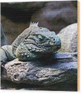 Sleepy Iguana Wood Print