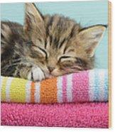 Sleepy Kitten Wood Print