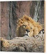 Sleepy Lion Wood Print