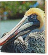 Sleepy Pelican Wood Print