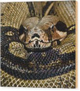 Sleepy Snake Wood Print