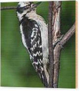 Sleepy Woodpecker Wood Print