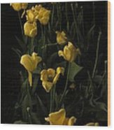 Sleepy Yellow Tulips Of The Silent Nocturne Wood Print