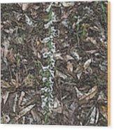 Slender Ladies Tresses Orchids Wood Print