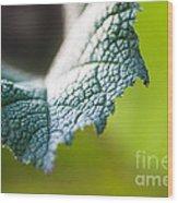 Slice Of Leaf Wood Print
