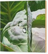 Sliced Cabbage Wood Print