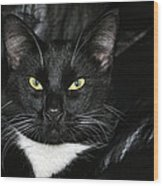 Slick The Black Cat Wood Print