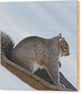 Sliding Squirrel Wood Print