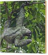 Sloth 8 Wood Print