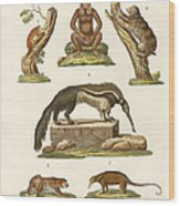 Sloths And Anteaters Wood Print