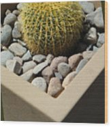 Small Barrel Cactus In Planter Wood Print