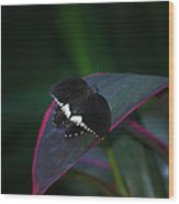 Small Black Butterfly Wood Print