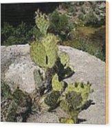 Small Cactus Wood Print