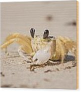 Small Crab On The Beach Wood Print