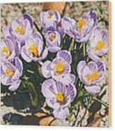 Small Crocus Flower Field Wood Print