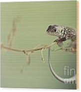 Small Lizard Sitting On The Branch Wood Print