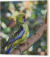 Small Parrot Wood Print
