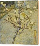 Small Pear Tree In Blossom Wood Print