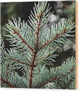 Small Pine Wood Print