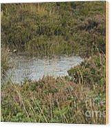 Small Pond Wood Print
