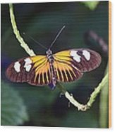 Small Postman Butterfly Wood Print