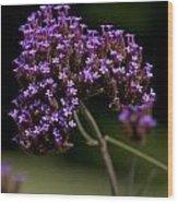 Small Purple Flowers On A Verbena Plant Wood Print