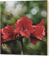Small Red Flowers Wood Print