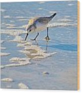 Small Sandpiper Looking For Dinner Wood Print