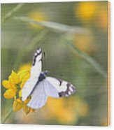 Small White Butterfly On Yellow Flower Wood Print