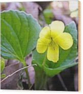 Small Yellow Violet Wood Print