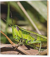 Smaragd-green Grasshopper Wood Print