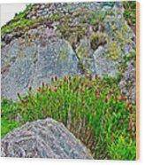 Smartweed Just Below Huayna Picchu's Peak-peru  Wood Print