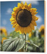 Smile Sunflower Wood Print by Jason Bartimus