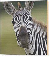 Smiling Burchells Zebra Wood Print