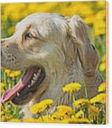 Smiling Dog Wood Print