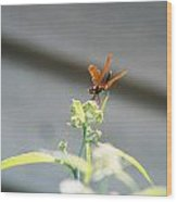 Smiling Dragonfly 1 Wood Print