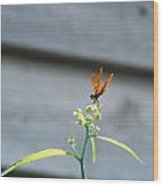 Smiling Dragonfly 2 Meerrp Wood Print