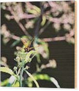 Smiling Dragonfly 3 Wood Print