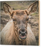Smiling Elk Wood Print