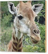 Smiling Giraffe Wood Print