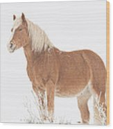 Smiling Palomino In The Snow Wood Print
