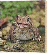 Happy Toad Wood Print