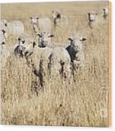 Smiling Sheep Wood Print
